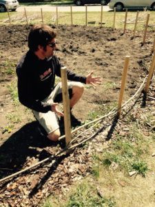 Owner Andrew Kent weaves willow branches between ground stakes.
